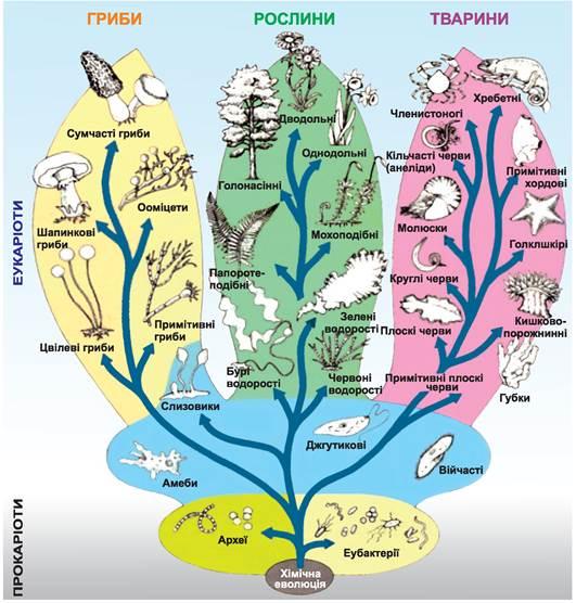 Макроеволюція та її закономірності - Підручник з Біології. 9 клас. Межжерін - Нова програма