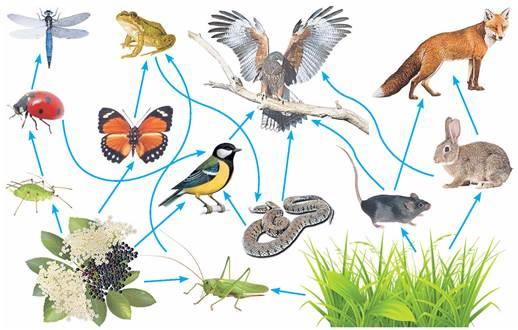 Перетворення енергії в біогеоценозах - Підручник з Біології і ...