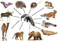 Макроэволюция - Учебник по Биологии. 9 класс. Соболь - Новая программа
